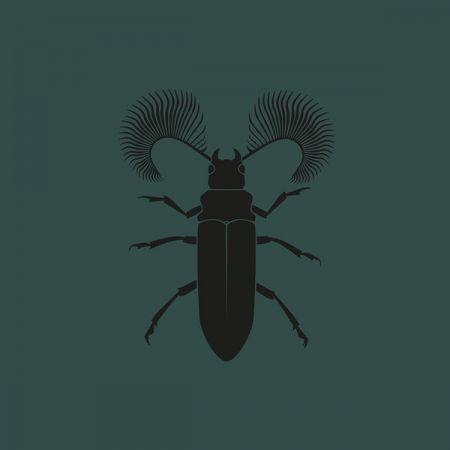 Pozek - Featherhorned Beetle